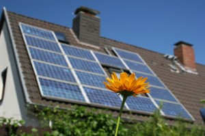 Solar cells on a roof with flowers in the foreground